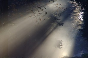 Holy Spirit: Walk This Way